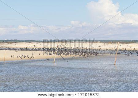 Neotropic Cormorant On The Beach