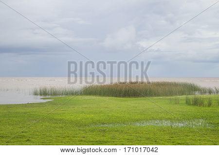 Vegetation In Lagoa Do Patos Lake