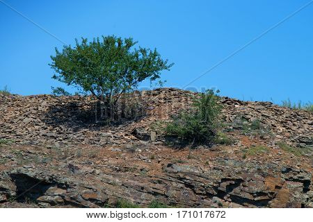 Rocky landscape with lonely tree and blue sky