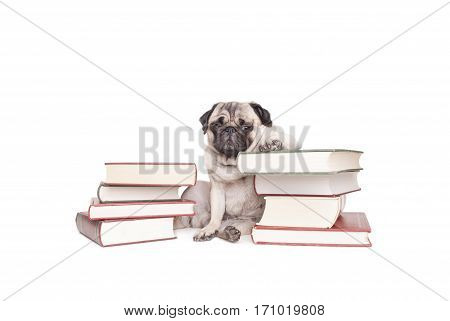 funny little pug dog puppy sits between piles of books and looking cool isolated on white background