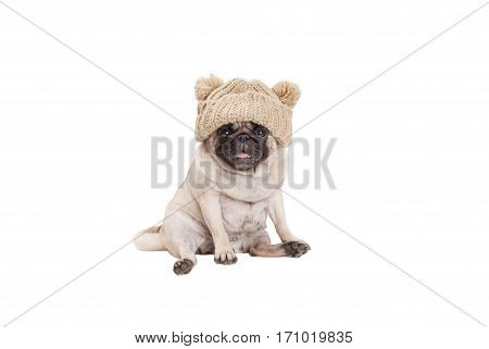 cute little pug puppy dog sitting down smiling wearing knitted hat, isolated on white background