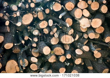The cut logs of different size for the fire outside