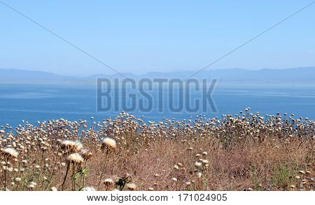 dried flowers on the shore of the Sea of Marmara