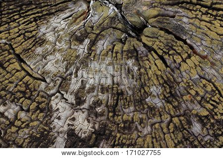 Close up of old wood background in Asia