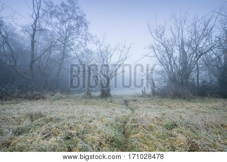 Freezing Fog over British Countryside at Wintry Morning
