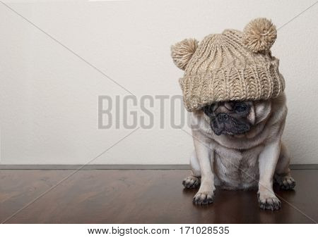 cute little pitiful sad pug puppy dog sitting down on wooden floor