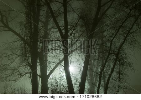Gloomy branches of tree in the fog
