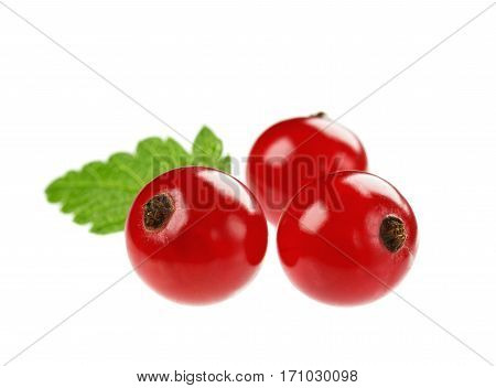 Red currant isolated on white background. Macro.