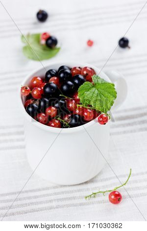 Black currant and red currant in a white cup on a linen napkin collection of summer berries.