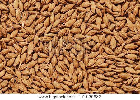 Malt seeds background, barley grains, beer ingredient