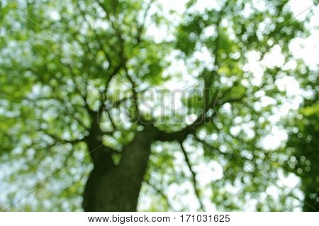 View of big tree blurred background in tropical forest