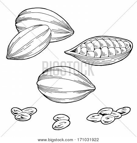 Cocoa bean graphic black white isolated sketch illustration vector