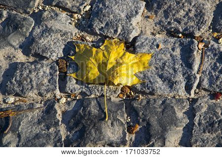 Leaf on the paving stone in the park