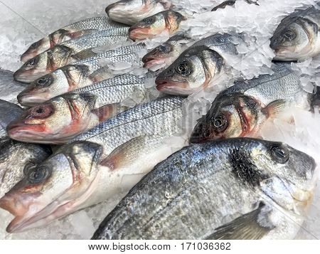 Fresh fish laying in ice close up