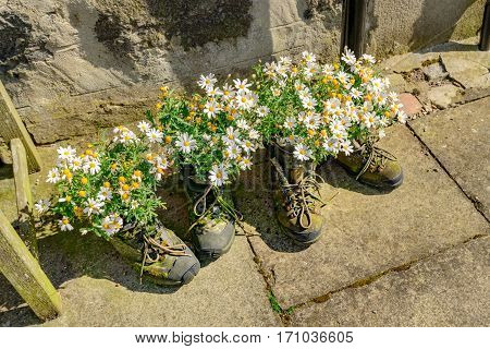 FOOTDEE (Fittie) ABERDEEN SCOTLAND UK - JUNE 21 2016: Flowers growing in a pair of boots at the small village of Footdee (aka Fittie). A nineteenth century fishing village close to entrance of Aberdeen harbour.