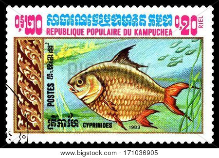STAVROPOL RUSSIA - February 10 2017 : A Postage Stamp Printed in the Cambodia Shows Goldfish circa 1983