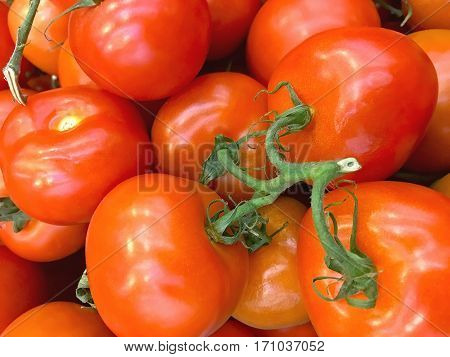 Vegetable background - Ripe red tomatoes chili closeup