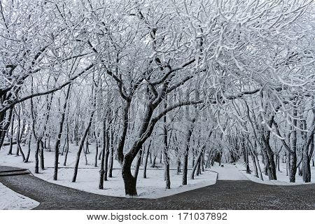 In the winter park of Pyatigors,kNorthern Caucasus,Russia.