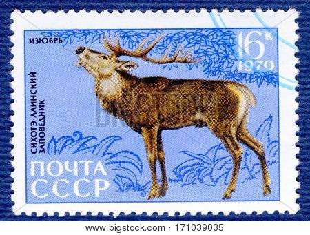 USSR - CIRCA 1970: Postage stamp printed in USSR with a picture of Red deer (lat. Cervus elaphus xanthopygus), of the series