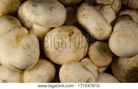 Background Of The Champignon Mushrooms On A Wooden Table