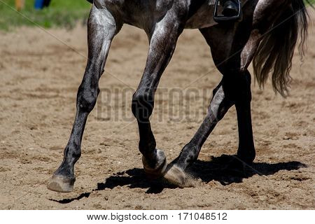 Close Up Of A Horse Legs