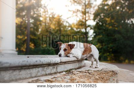 Cute Dog Portrait In Autumn Outsude