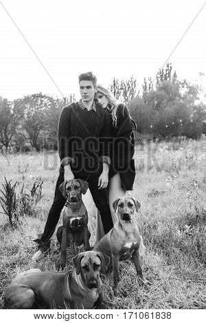 Tree Rhodesian ridgeback in a field on a leash in men and women. Young man and woman sitting on the grass on the background of wood. Love story. Fashion photography concept. . Boy and girl walking with a dogs