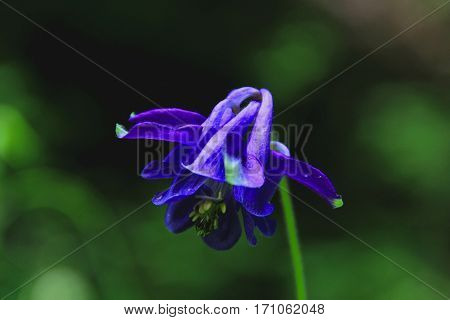 Magnificent blue flower presents itself in warm sunlight