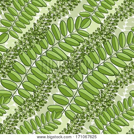 Green seamless pattern with acacia leaves. Spring Vector background for packaging, textile and fabric design.