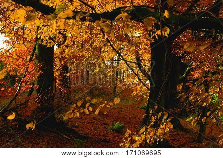 An idyllic autumn forest flooded with sunlight