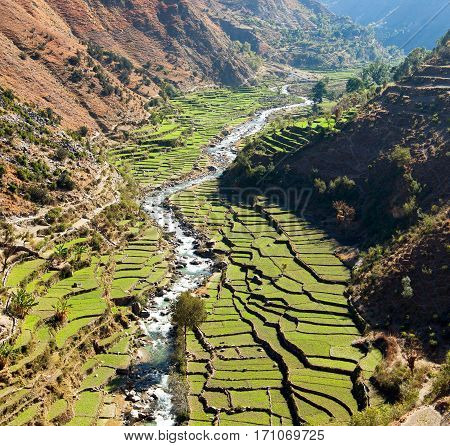 Beautiful terraced rice field in valley around river green rice field or paddy field in western Nepal asian rice Oryza sativa