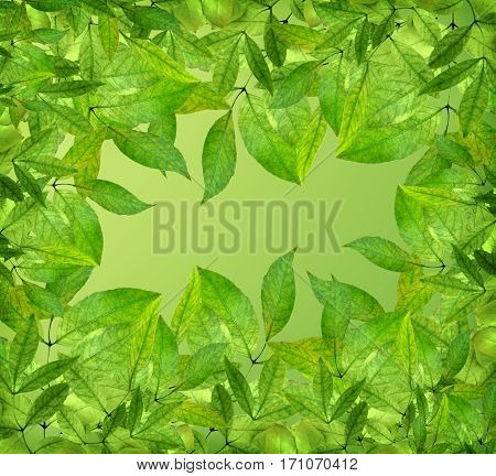 background of green leaves spring or summer season bright colors. Close-up. Spring in the park.