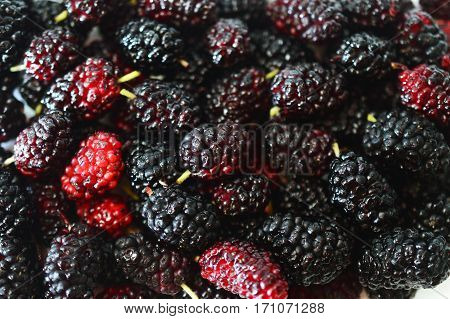 background from tasty ripe and frash black mulberry