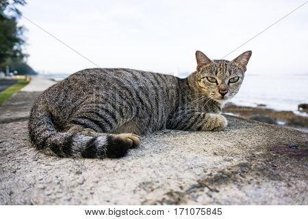 Stray cat sitting on a concrete slab.