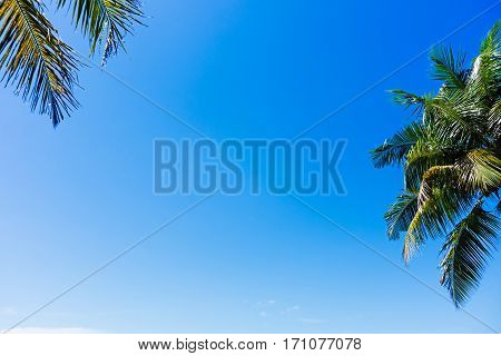 Summer Background, Coconut Palm Tree Against Blue Sky.