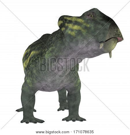 Lystrosaurus Dinosaur on White 3d illustration - Lystrosaurus was a dicynodont therapsid dinosaur that lived in the Permian and Triassic Periods of Antarctica India Africa China Mongolia and Russia.