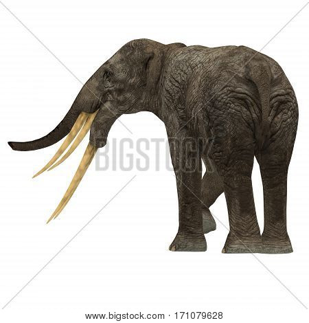 Stegotetrabelodon Elephant Tail 3d illustration - Stegotetrabelodon was an elephant that lived in the Miocene and Pliocene Periods of Africa and Eurasia.