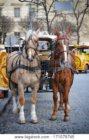 A Beautiful Brown Horse In Harness In The Street In The City.