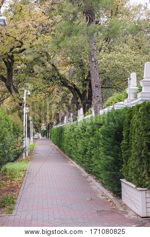 The path along the green fence. Plants and trees in a suburban landscape design.