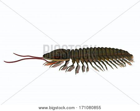 Trilobite triarthrus Side Profile 3d illustration - Trilobite triarthrus is a Burgess shale animal that lived in the Cambrian seas of Canada North America China and Scandinavia.