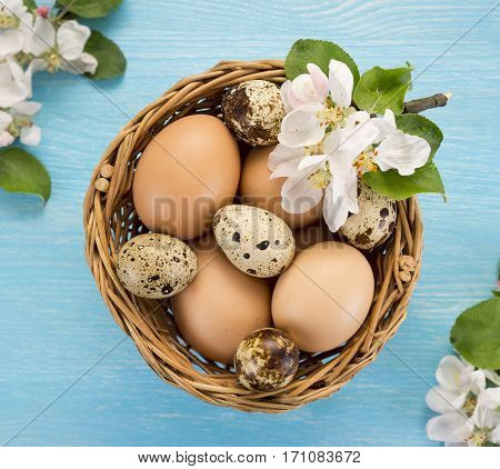 Chicken and quail eggs in the basket and spring flowers on blue wooden background. Easter concept.