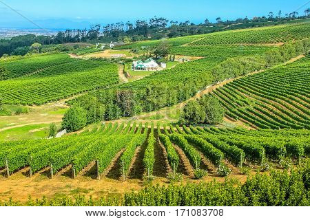 Drone view of vineyards in Cape Town peninsula, South Africa. Constantia valley in Western Cape is a popular Wine Route.