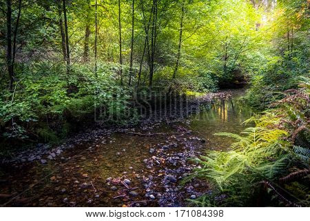 Image of a shallow creek flowing through a forest.