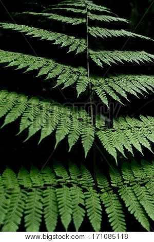 Image of a fern pattern in the Costa Rican jungles.