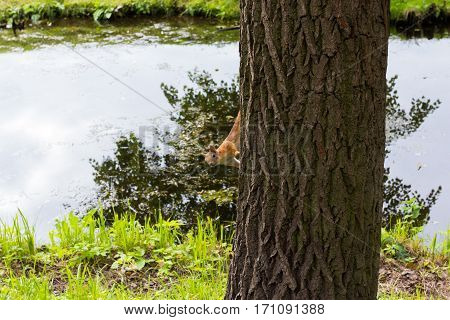Squirrel sitting on the tree trunk near the lake