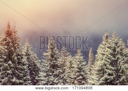 Mysterious winter landscape majestic mountains in winter. Magical winter snow covered tree. Carpathian, Ukraine, Europe. Instagram toning effect.