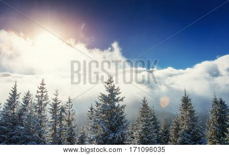 Mysterious winter landscape majestic mountains in winter. Magical winter snow covered tree. Europe. Happy New Year. In anticipation of the holidays