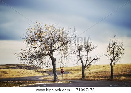 Three Trees By A Road And Stop Sign, Retro Stylized Travel Picture.