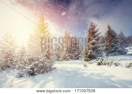 Mysterious Winter landscape with fog, majestic mountains in the winter. Sunset. Magic winter snow covered tree. Carpathian, Ukraine, Europe.