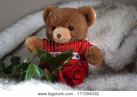 Valentine's teddy bear with red rose on bed